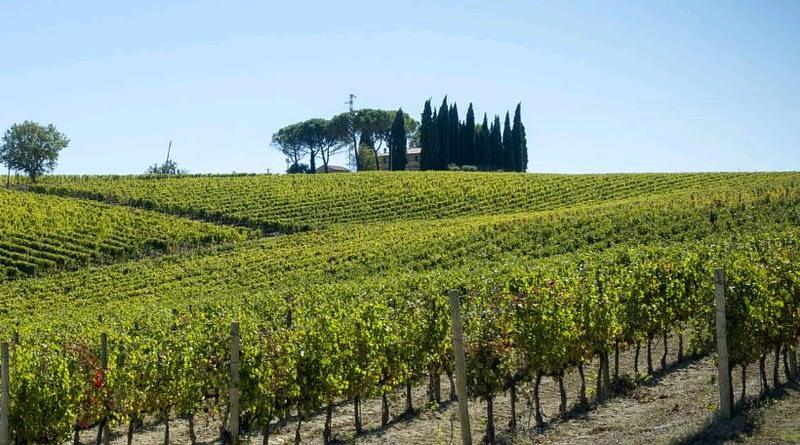 I vini Scacciadiavoli da abbinare ai piatti della tradizione umbra