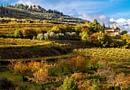"""I """"Vini del Veneto"""" secondo Go Wine"""