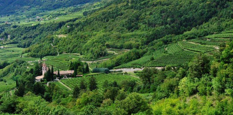 Bottega Vinai di Cavit: Il sapore del Trentino in un calice