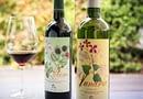 I vini di Ronchi di Castelluccio: l'eccellenza della Romagna